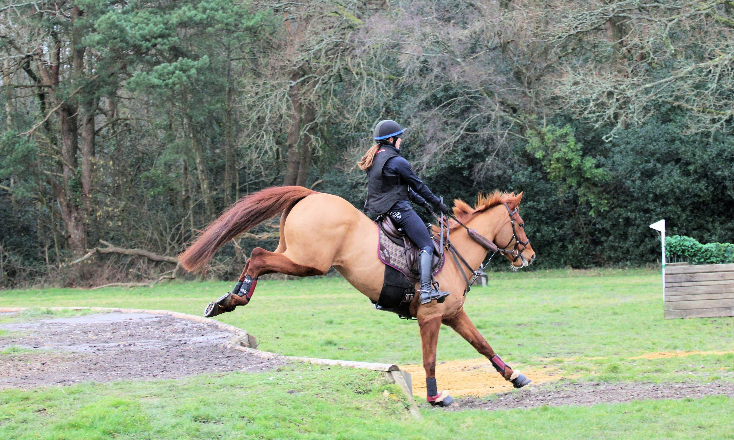 GreenLane Stud - Competition horses breeders