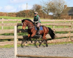 GreenLane Stud Competition Horse Breeders stallions
